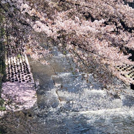 ご近所お花見散歩_f0197215_13030249.jpeg