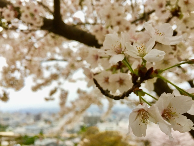 平成から令和へ…2019年の春。_c0229219_22365041.jpeg