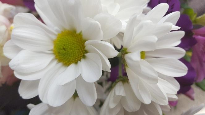 Flowers..._f0126121_14542096.jpg