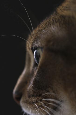 [猫的]ブラックシリーズ_e0090124_22592287.jpg