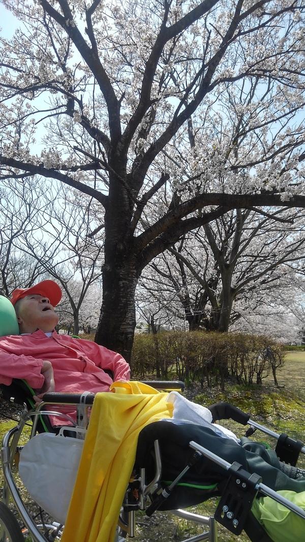 桜のした_d0180229_1821275.jpg