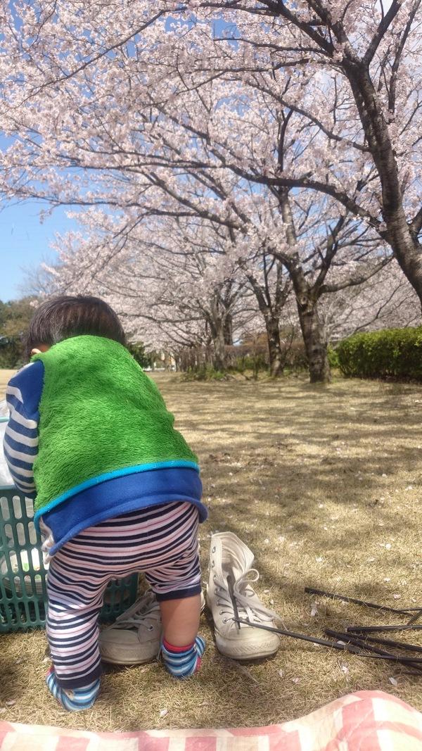 桜のした_d0180229_1823241.jpg