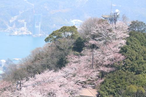 お花見登山③頂上へ_a0345833_22011620.jpg