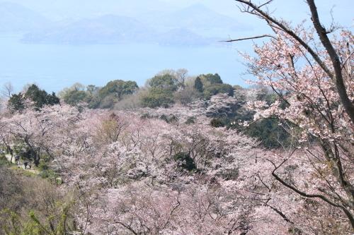 お花見登山③頂上へ_a0345833_22021682.jpg