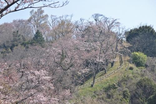 お花見登山③頂上へ_a0345833_22035802.jpg