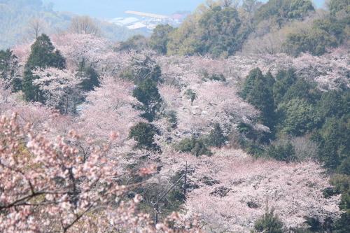 お花見登山③頂上へ_a0345833_22121780.jpg