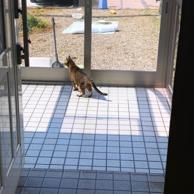 初めての猫玄関_d0355333_21382572.jpg
