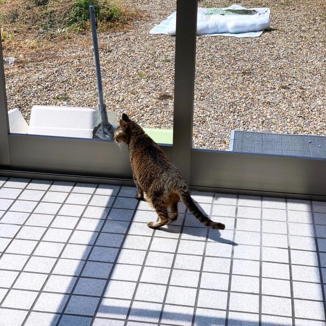 初めての猫玄関_d0355333_21382848.jpg