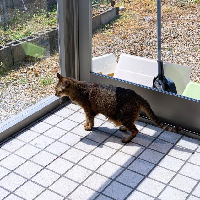 初めての猫玄関_d0355333_21383043.jpg