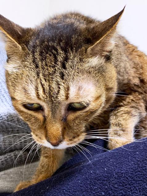 初めての猫玄関_d0355333_23295673.jpg