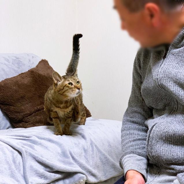 初めての猫玄関_d0355333_23295832.jpg