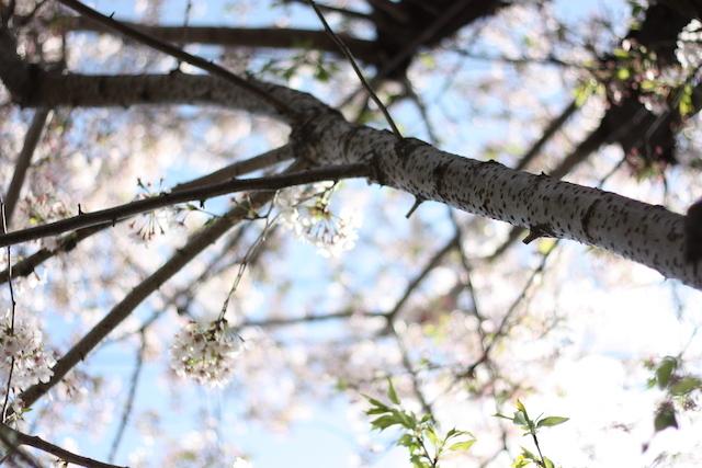 春を待ってた_e0056237_20444953.jpg