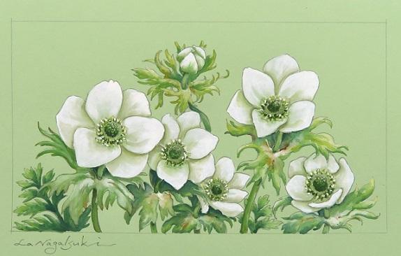 白色の花たちの水彩画_b0089338_22221898.jpg