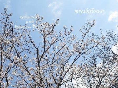 春の和菓子 とらやの「御代の春」_b0255144_00273005.jpg