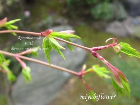 春の和菓子 とらやの「御代の春」_b0255144_00274606.jpg
