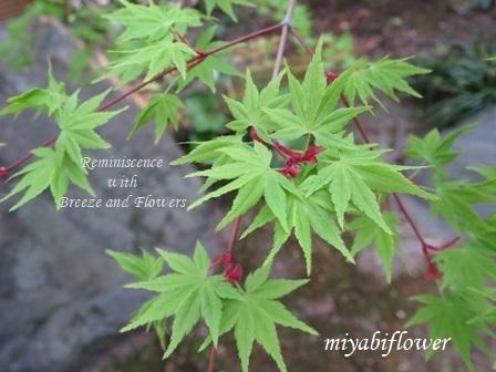 春の和菓子 とらやの「御代の春」_b0255144_00275200.jpg