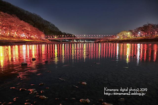 井原堤の夜桜_f0324756_09302562.jpg