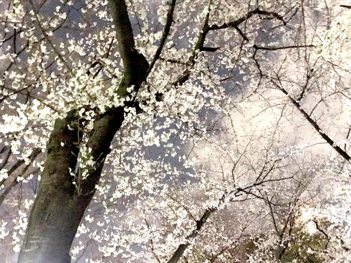 お花見!_f0300358_11010026.jpg