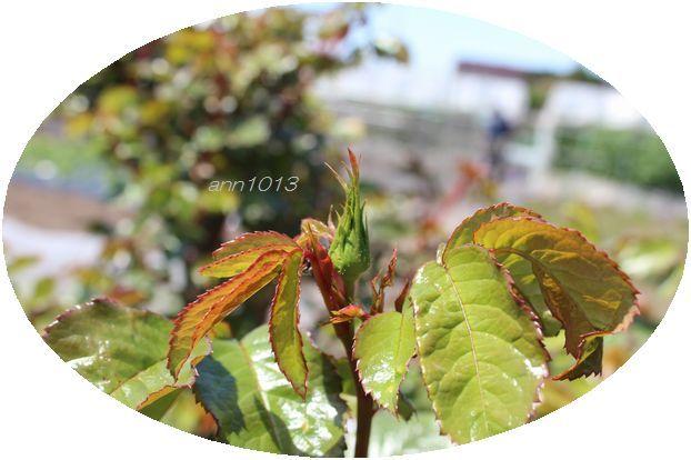 e0232963_20105744.jpg