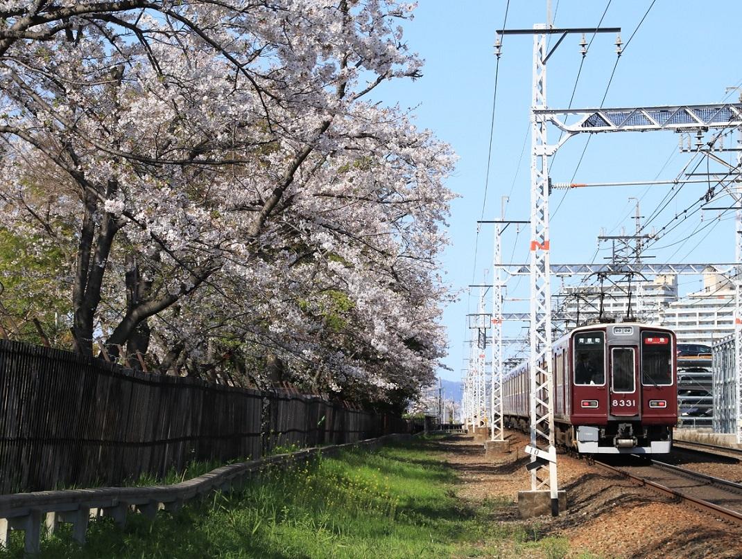 阪急8331F サクラ 2019年 _d0202264_163026100.jpg