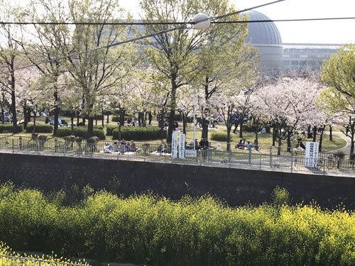 桜_e0251265_17331422.jpg