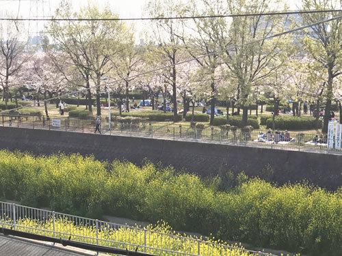 桜_e0251265_17333015.jpg