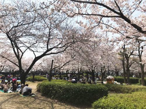 桜_e0251265_19271368.jpg