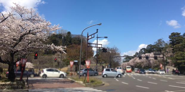 桜が見頃です!_c0225067_14103211.jpg