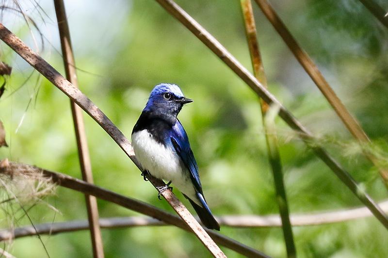 夏鳥が入りました。_f0368272_21525368.jpg