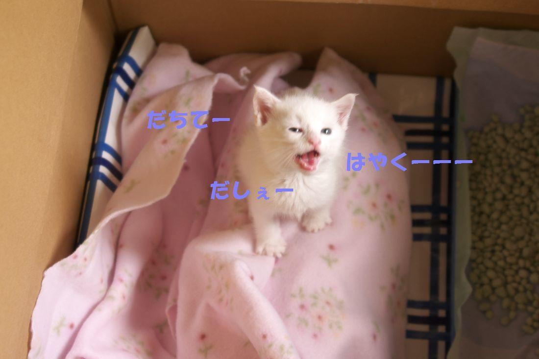 b0061787_22260120.jpg