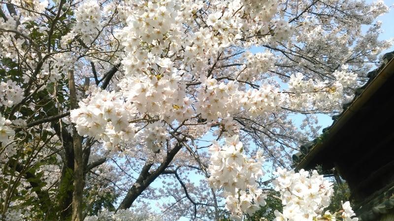 春の布々展_b0299094_11360325.jpg