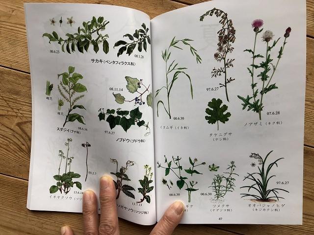 植物たちに Deep に迫る2冊_c0124100_23310019.jpg