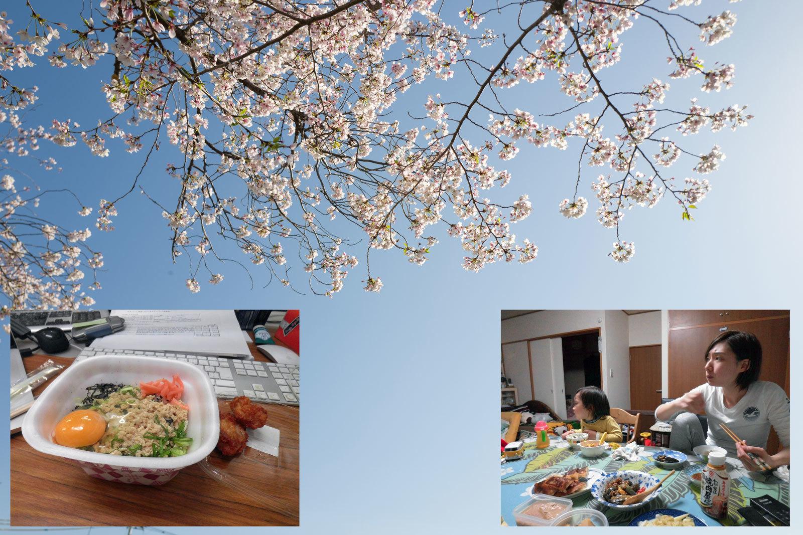 野川の桜が散り始めました。_a0271402_22340246.jpg