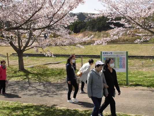 4/10 天啓公園_a0154110_11252876.jpg