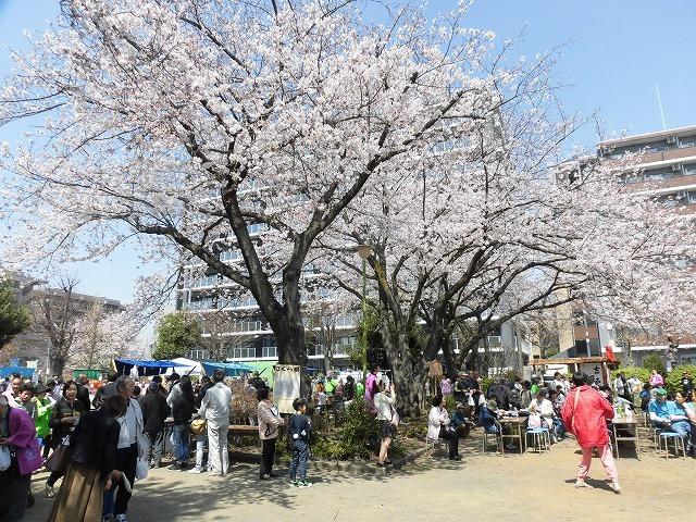 「さくら咲く」 晴天に恵まれ、さらにちょうど満開! 吉原地区さくら祭_f0141310_07395678.jpg