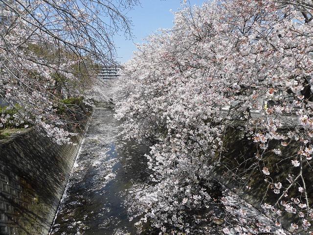 「さくら咲く」 晴天に恵まれ、さらにちょうど満開! 吉原地区さくら祭_f0141310_07400358.jpg