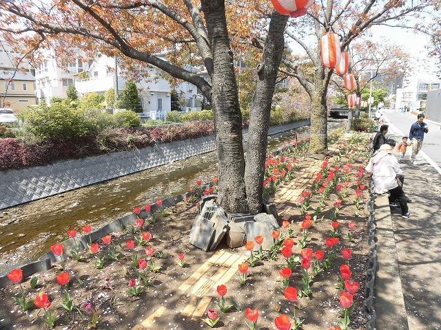 「さくら咲く」 晴天に恵まれ、さらにちょうど満開! 吉原地区さくら祭_f0141310_07400992.jpg