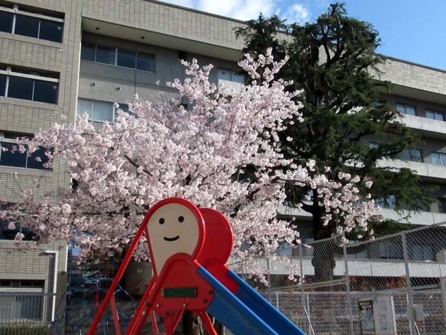 街中で満開 大谷大学あたり_e0048413_21485019.jpg