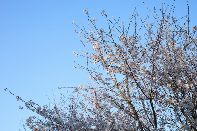 青空に_e0169421_22231663.jpg
