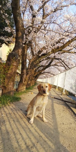 2019 桜_b0138824_17290529.jpg