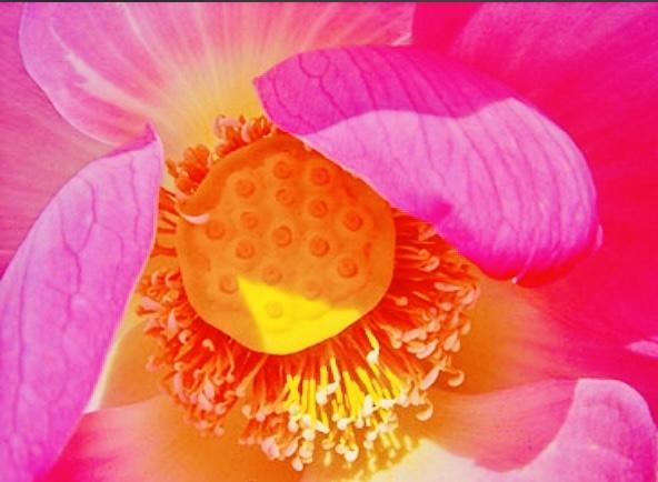 #Lotus _a0168628_11350822.jpeg