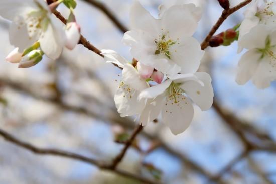 ぶどう農家の花見_d0336530_20413943.jpg