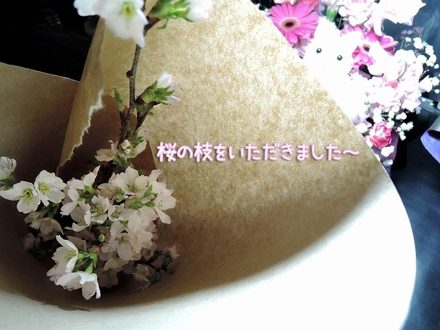 夜桜見納めエア散歩_c0062832_15513606.jpg