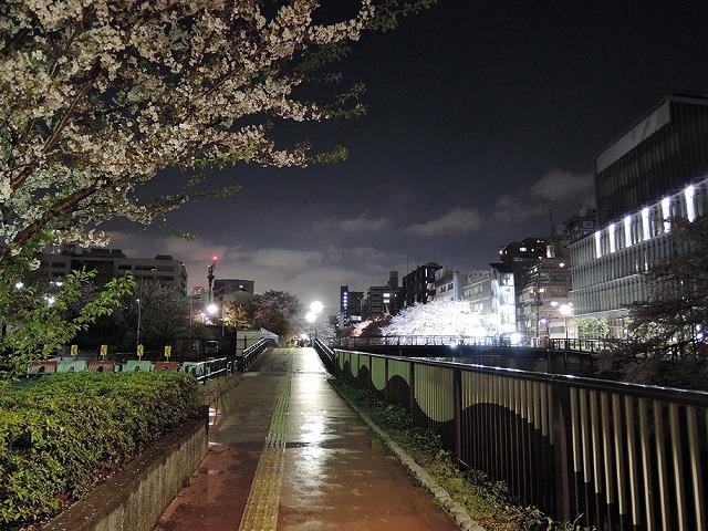 夜桜見納めエア散歩_c0062832_15513631.jpg