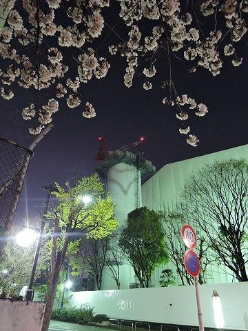夜桜見納めエア散歩_c0062832_15513744.jpg