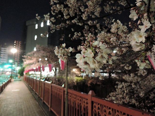 夜桜見納めエア散歩_c0062832_15513760.jpg
