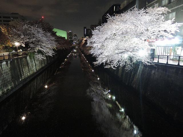 夜桜見納めエア散歩_c0062832_15513779.jpg