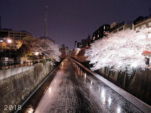 夜桜見納めエア散歩_c0062832_15522886.jpg