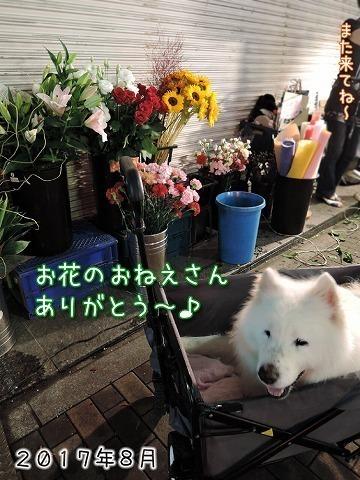 夜桜見納めエア散歩_c0062832_15531705.jpg