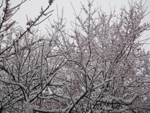 雪やこんこ      4月10日(水)_d0127634_06500523.jpg